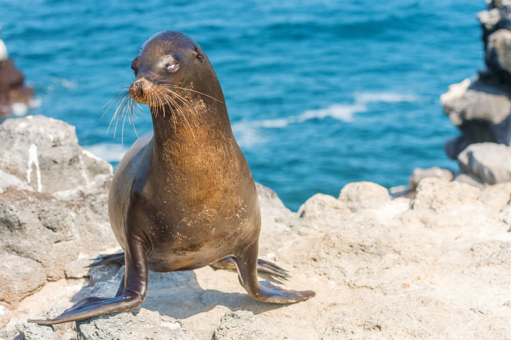 bigstock-Sea-Lion-In-Galapagos-Islands-131825957