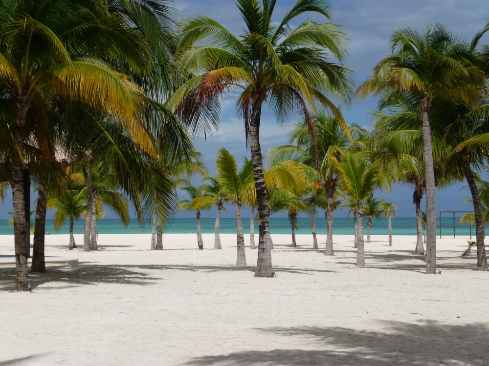 bigstock-Isla-Pasion--Beautiful-Palm-T-230095576
