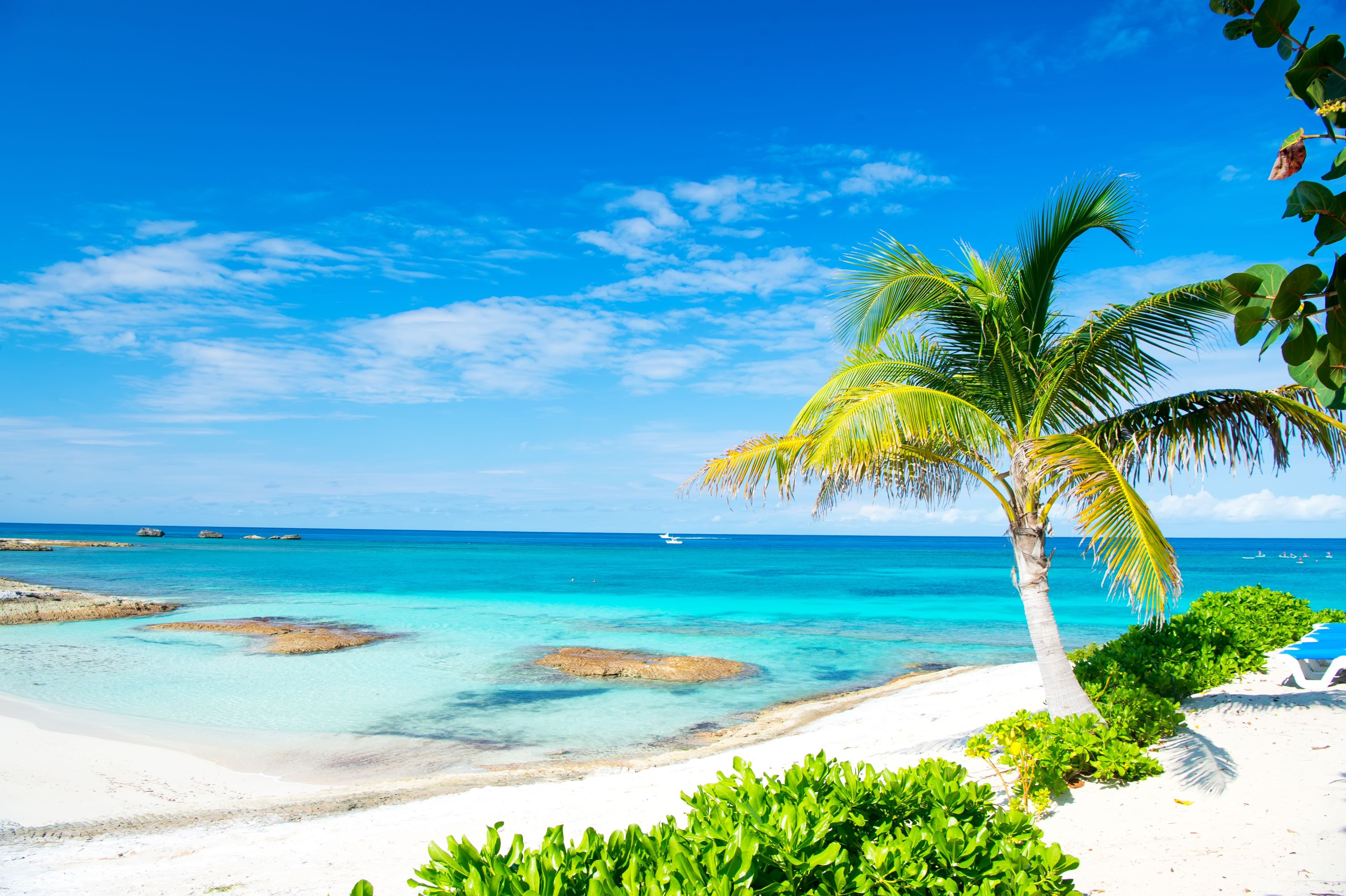 bigstock-Palm-Tree-Blue-Sea-Sky-In-Gr-229845730